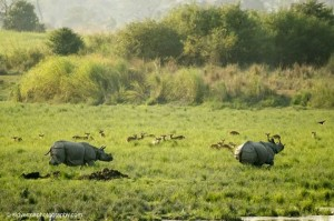 best time to visit kaziranga national park