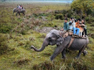 elephant safari booking