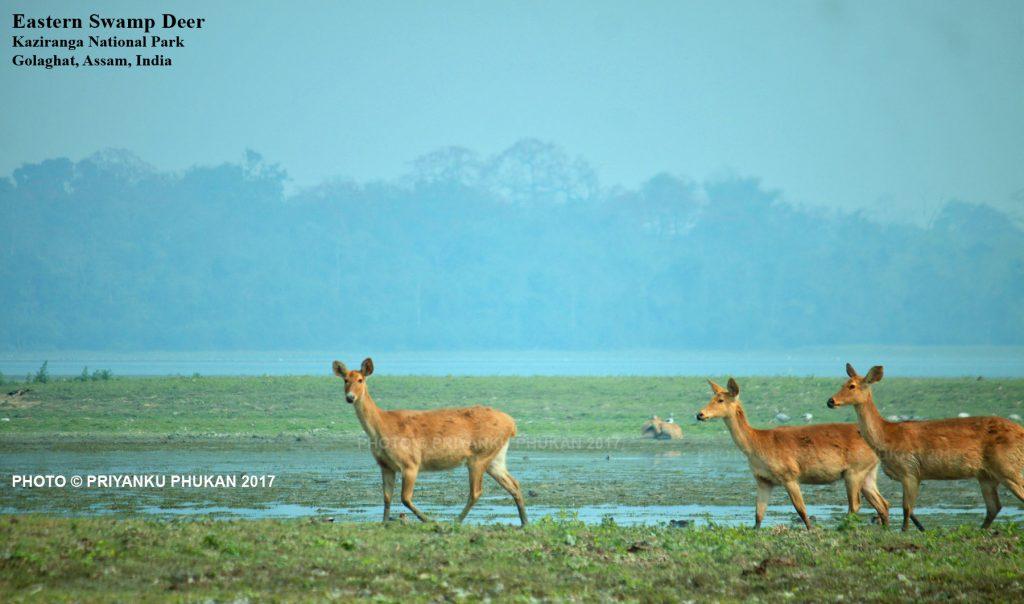 Kaziranga National Park opening date 2017