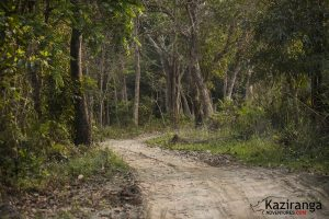 kaziranga national park road condition
