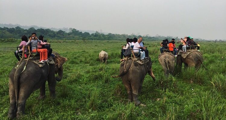 kaziranga-elephant-safari-instant-book