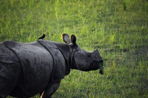 kaziranga-wildlife-safari-tour