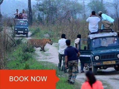kaziranga jeep safari online booking