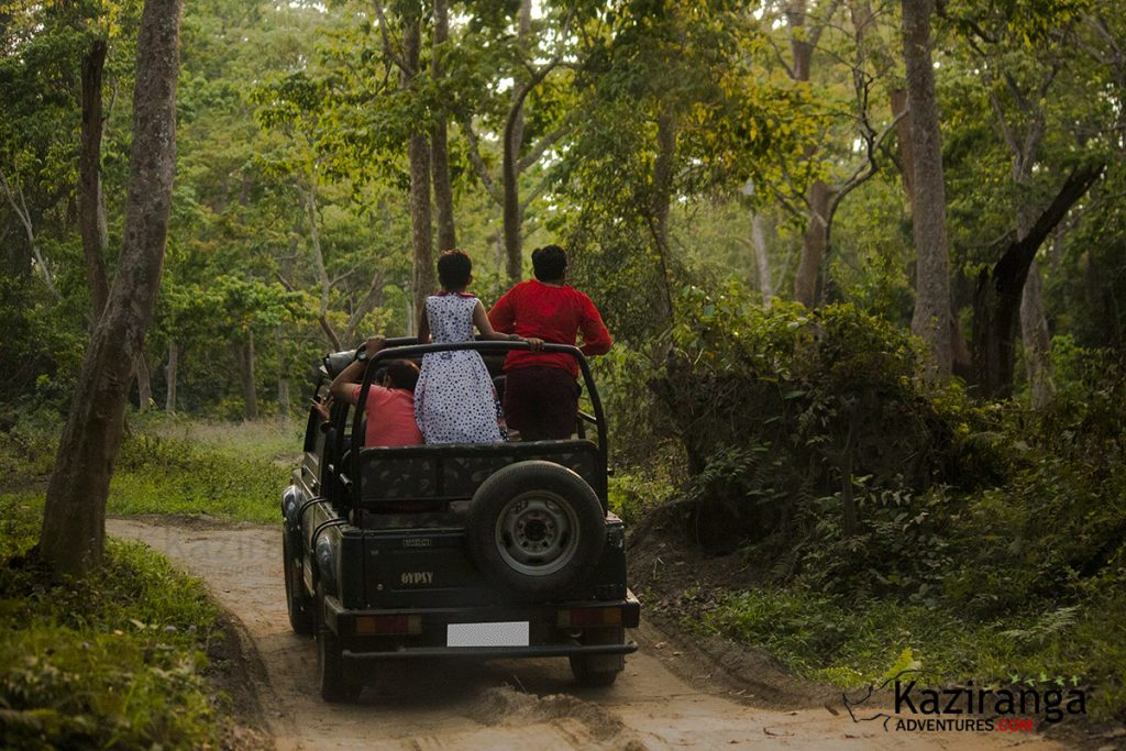 kaziranga national park jeep safari