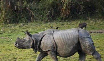 assam travel packages kaziranga national park kaziranga adventures wanderer's halt