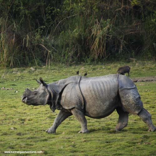 kaziranga national park opening date 2020