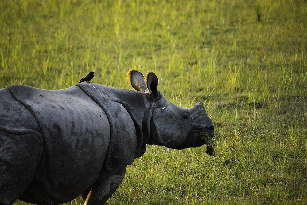 kaziranga national park opening dates 2019