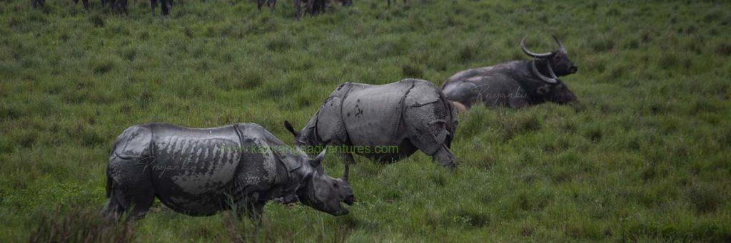 kaziranga-national-park-opening-date-2020