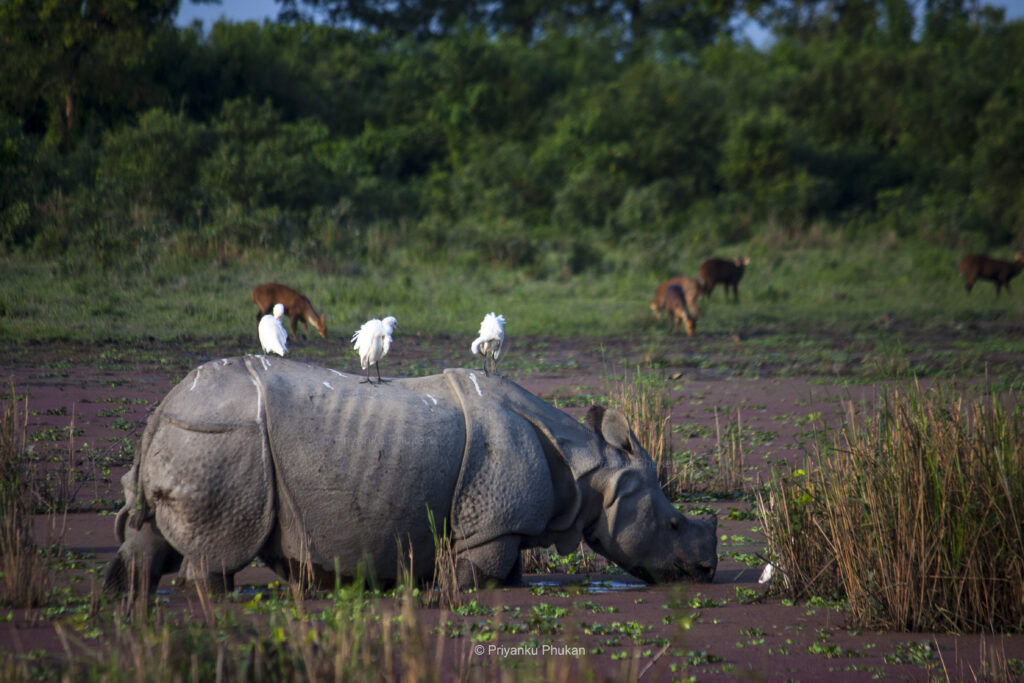 kaziranga national park 2021 opening dates